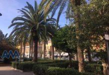 Le palme di Piazza Europa