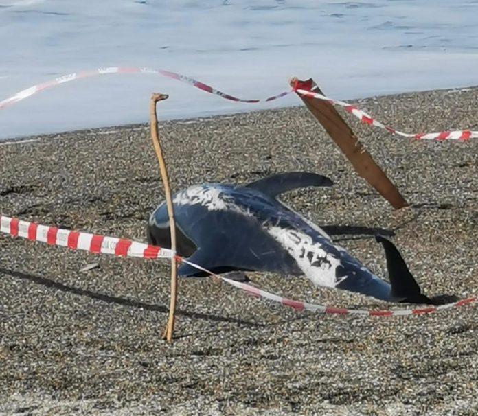 delfino morto milazzo